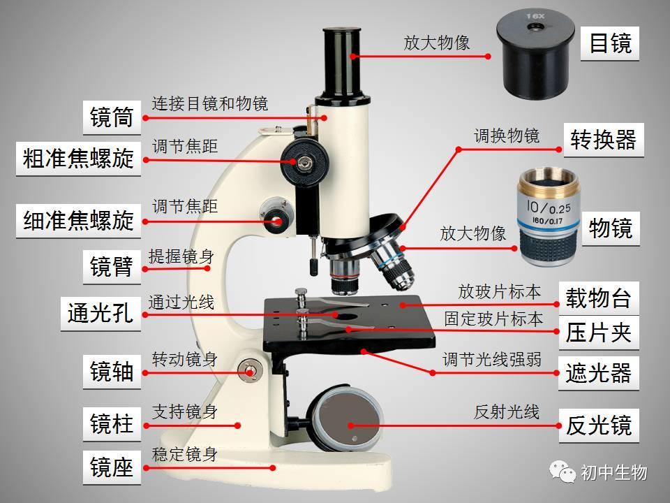 物理化学下册复习题_显微镜的使用方法-学习啦